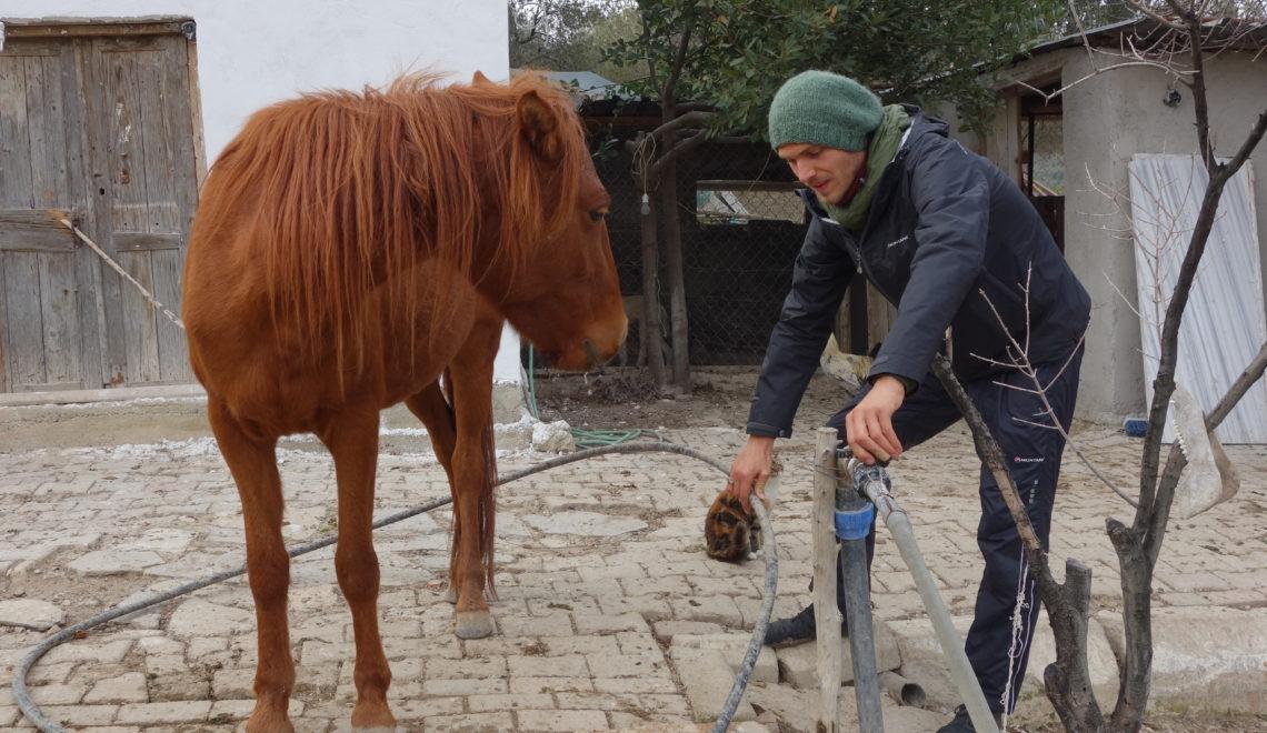 Fünf Wochen Paradies – Farmleben in Urla